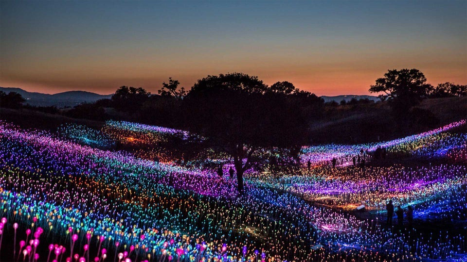 Field of Light in Paso Robles, Californië